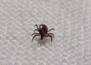 First tick of the year